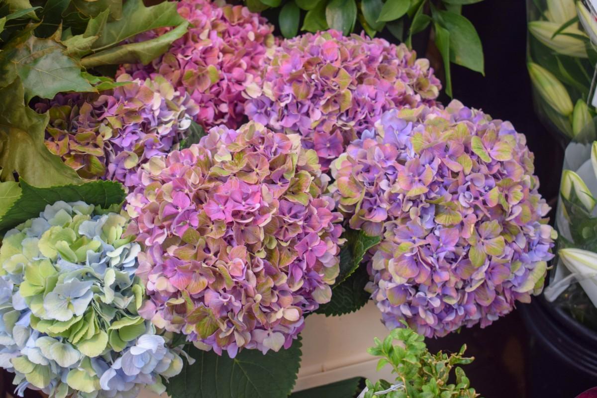Purple flowers at Amsterdam Flower Market