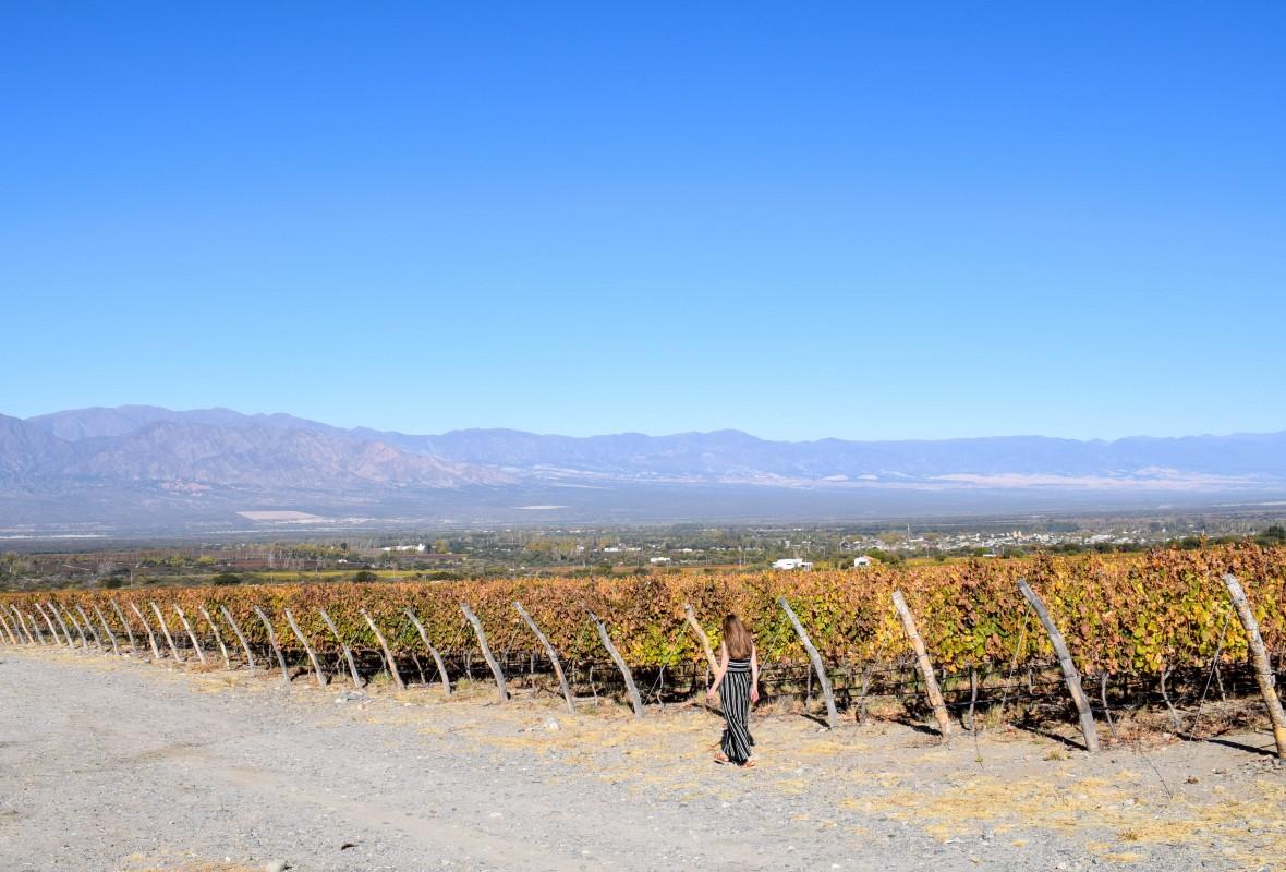 Piatelli vineyard Cafayate Argentina