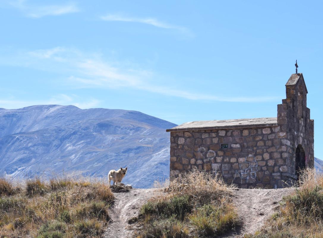 Wild dog at Capilla San Rafael church Cuesta del Obispo Argentina