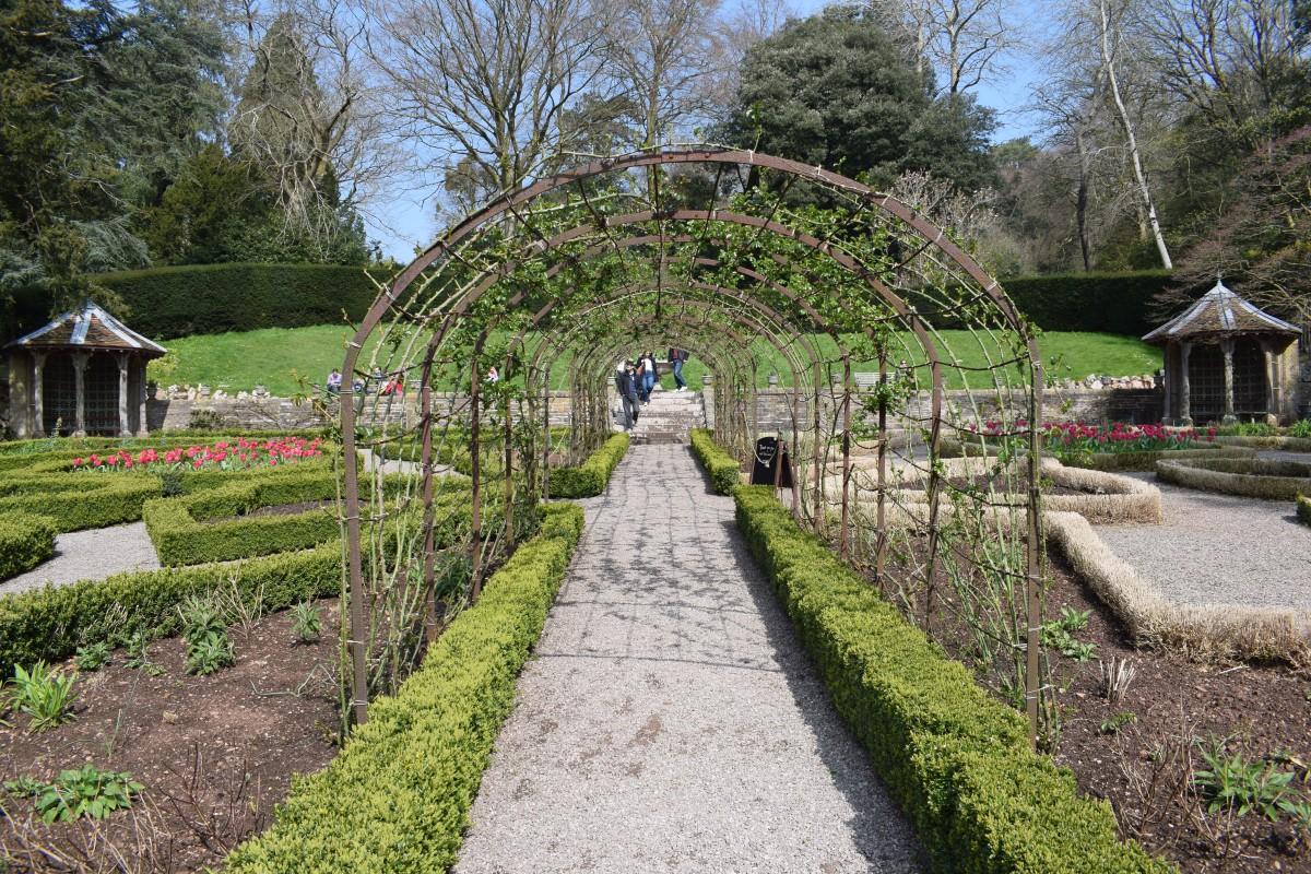 Rose Garden Tyntesfield