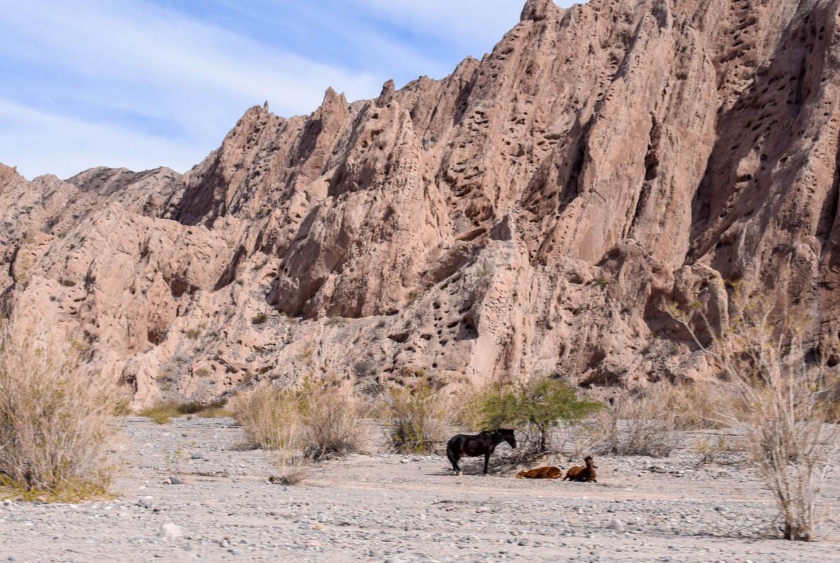 Wild horses along Route 40 Argentina