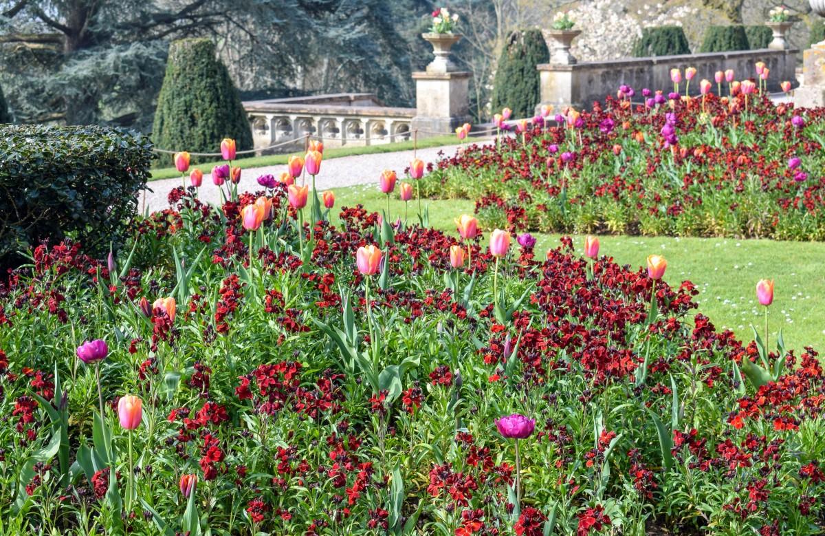 Spring at Tyntesfield