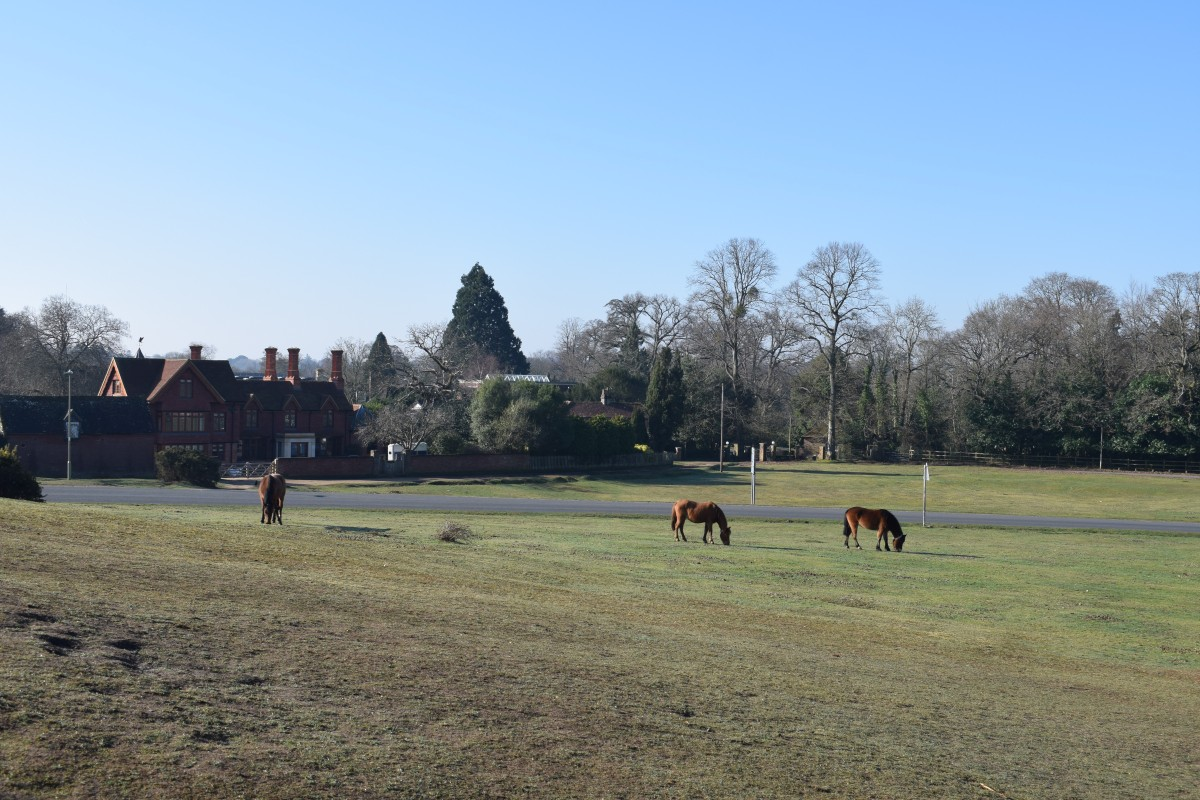 new forest ponies hampshire