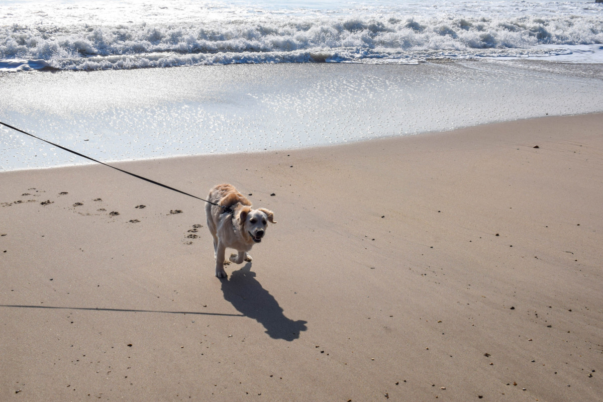Dog-friendly New Forest Hampshire