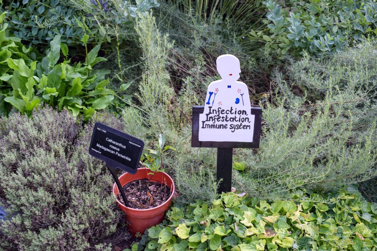 Bristol Botanic Garden Western Herb Garden