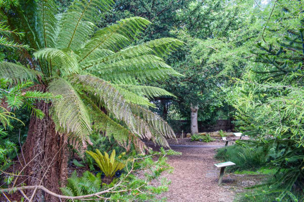 University of Bristol Botanic Garden-19