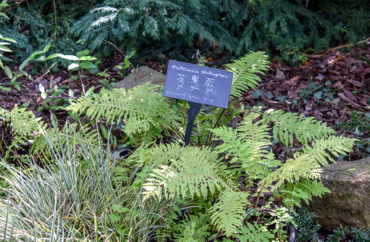 Bristol Botanic Garden Chinese garden