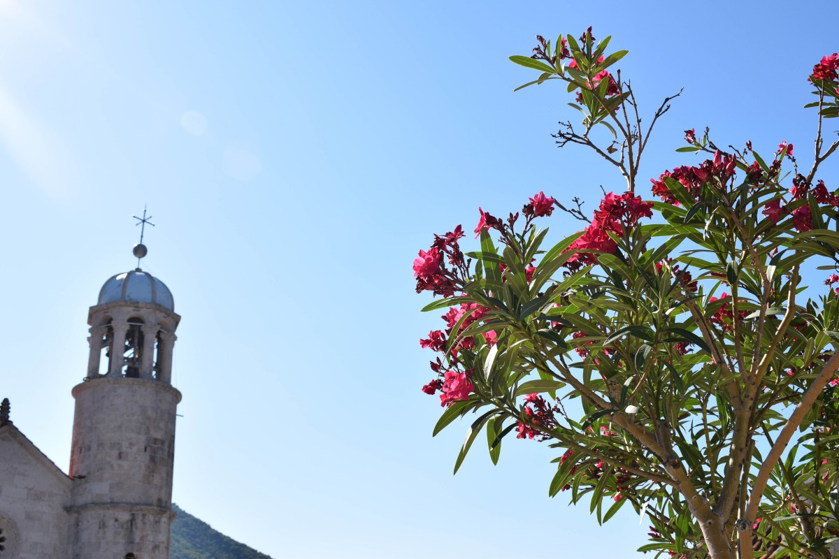 Flowers and Our Lady of the Rocks in Perast, Montenegro