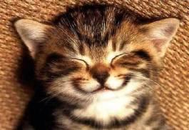 chat-sourire-motivation