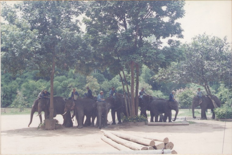 These Elephants carried people like us for a trek through the jungle