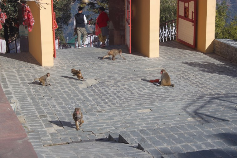 There are lots of monkeys at this Temple premises