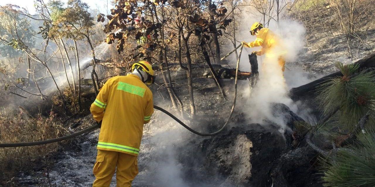 Casi 700 elementos combaten incendio en La Primavera