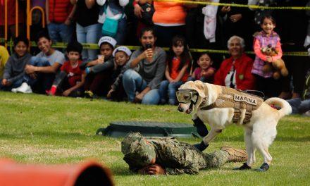 Se despide Frida, la rescatista canina del 19/17