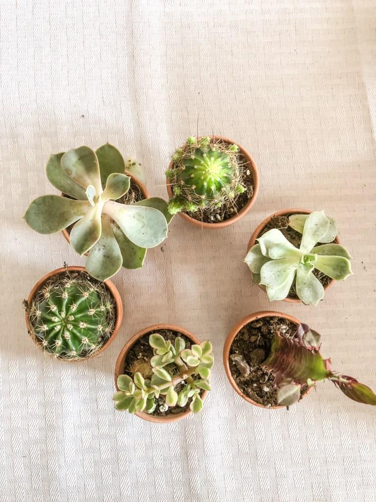 Unique Bridesmaid Proposal Idea: DIY Bridesmaid Brunch with Gift Box Succulents