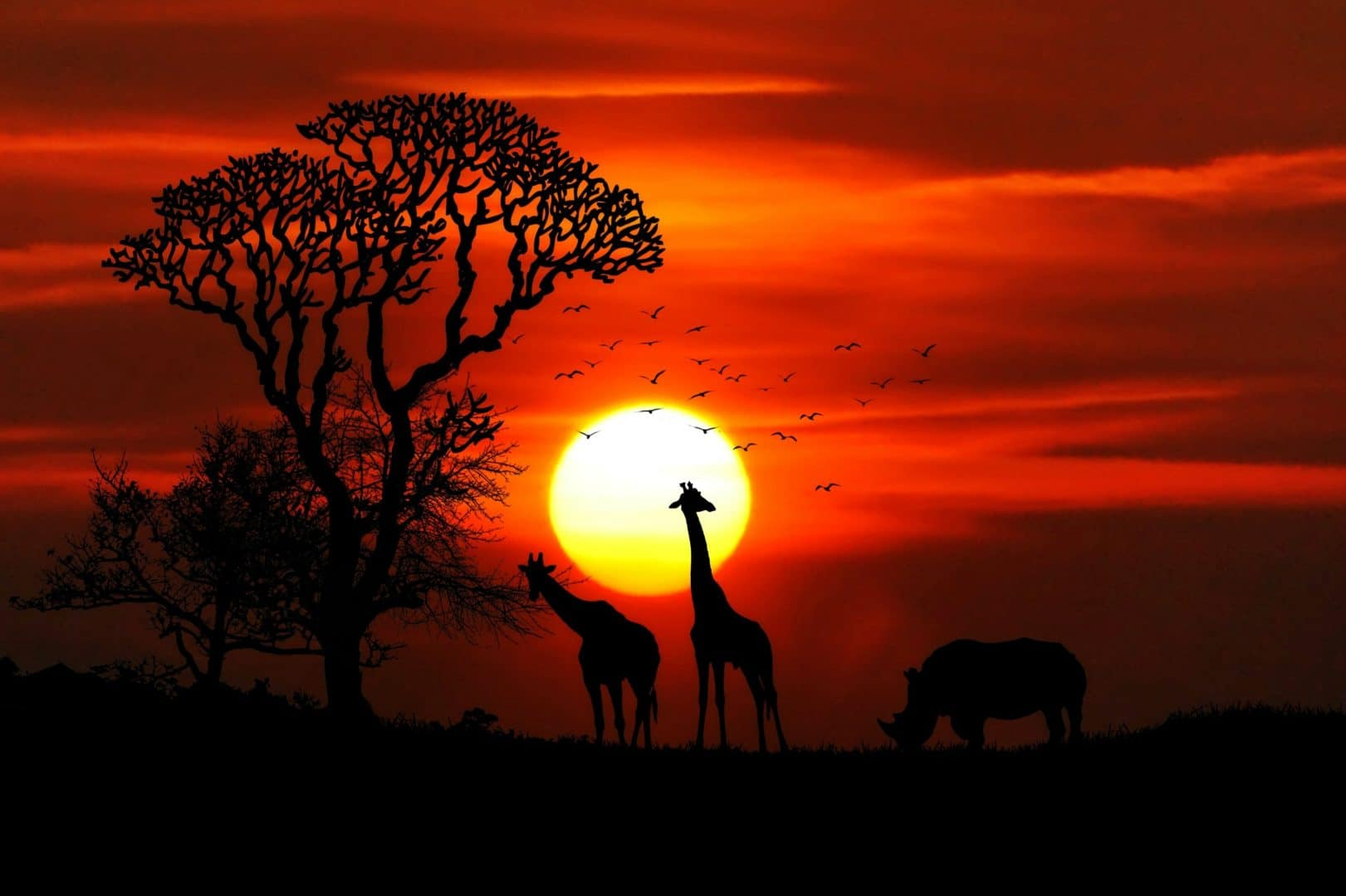 header incontournable-afrique-du-sud