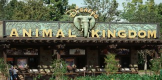 Horário de funcionamento das atrações do Animal Kingdom