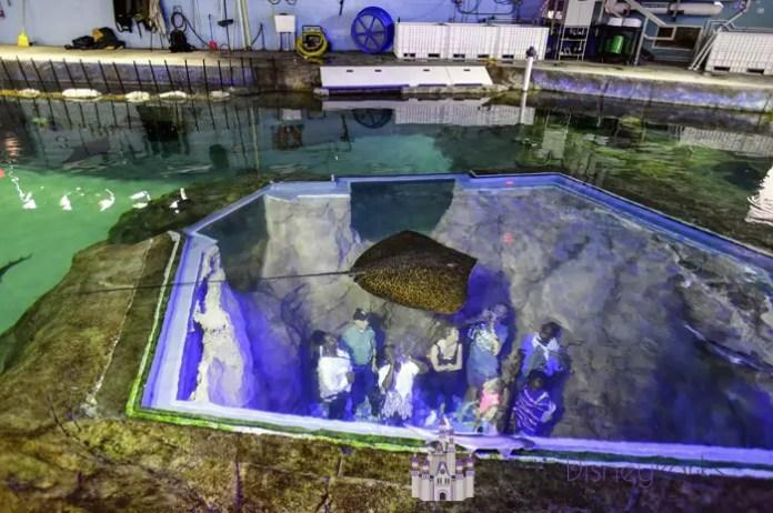 Inside Look SeaWorld