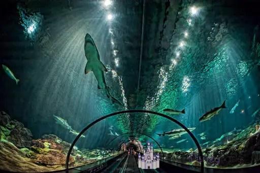 Shark-Encounter-Seaworld-tunel