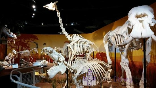 Skeletons Museum of Osteology - Icon Park