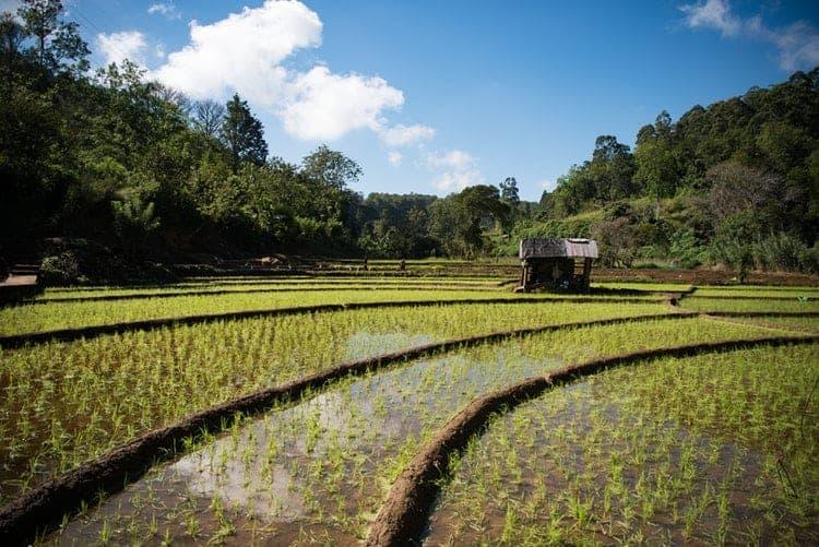 bolsa para mestrado em economia agrícola EPOS Alemanha