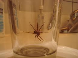 1. spider