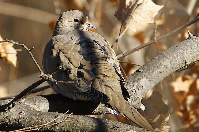 Via: http://goatsass.com/blog/2012/12/12/kentucky-lake-area-photos/