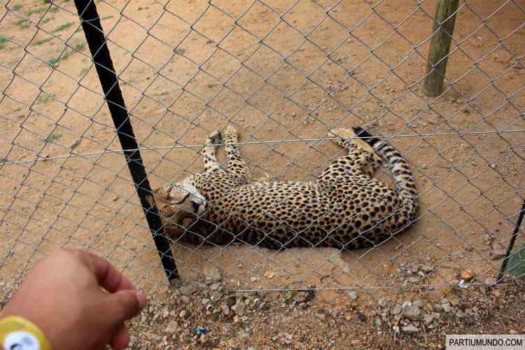 Lion and Safari Park 19
