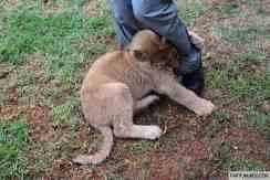 Lion and Safari Park 22