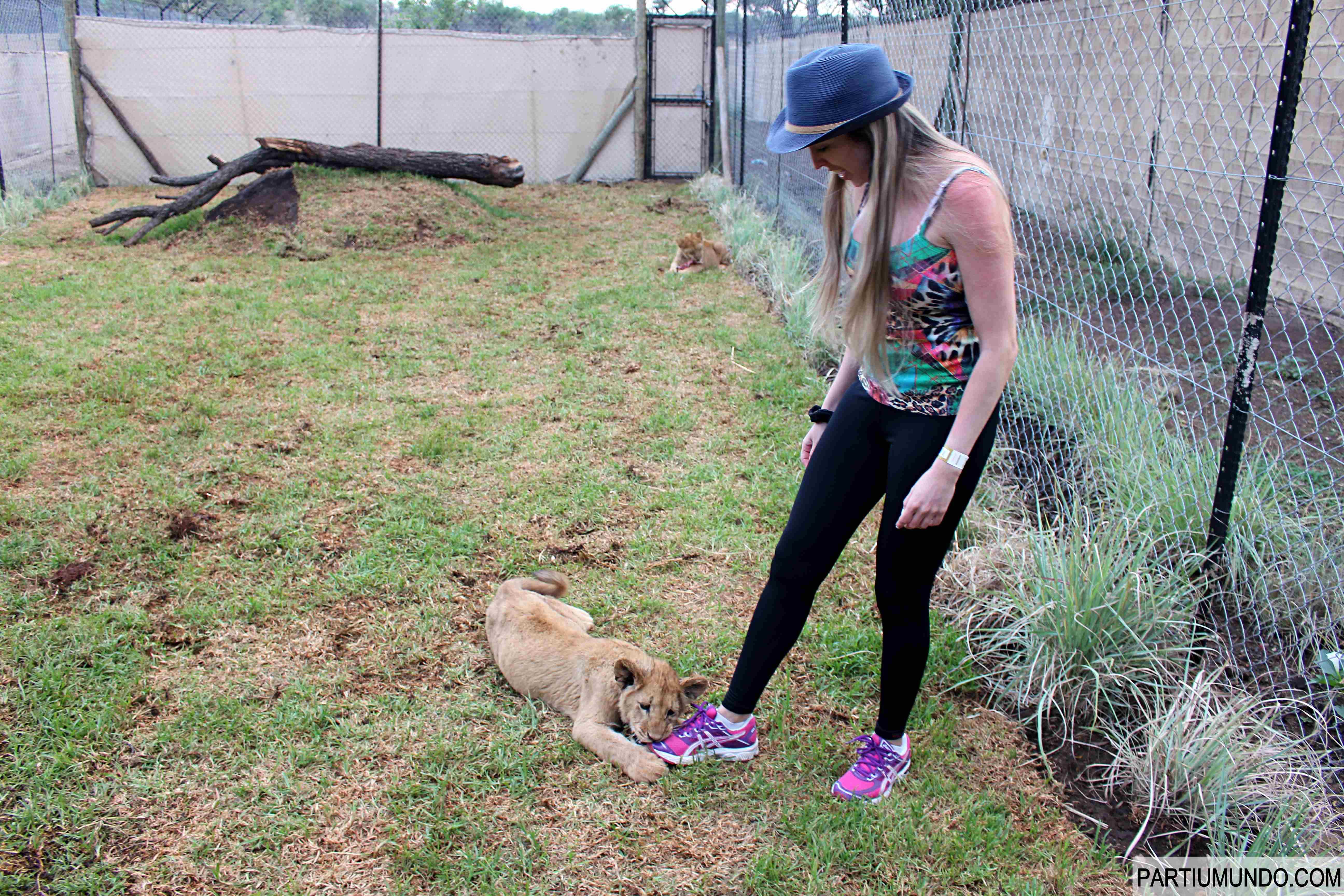Lion and Safari Park 25