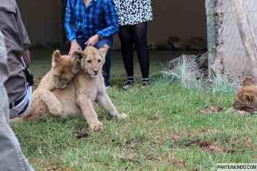 Lion and Safari Park 30
