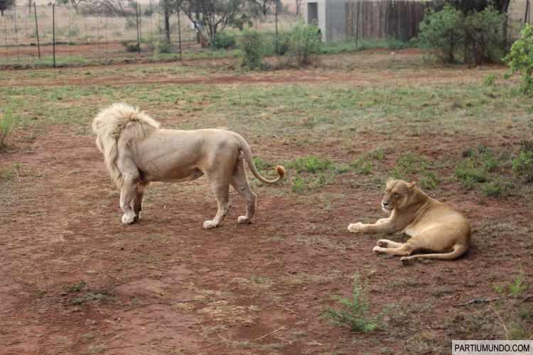 Lion and Safari Park 7