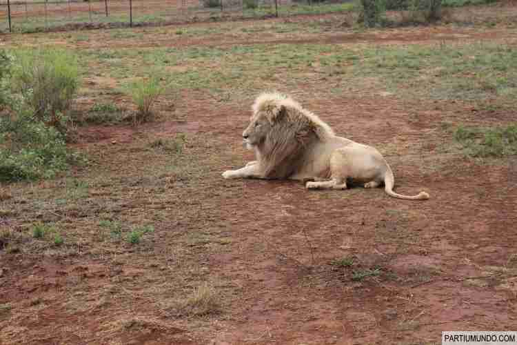 Lion and Safari Park 8