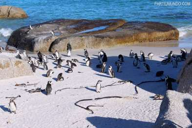 visiting_the_penguins_at_boulders_beach_1