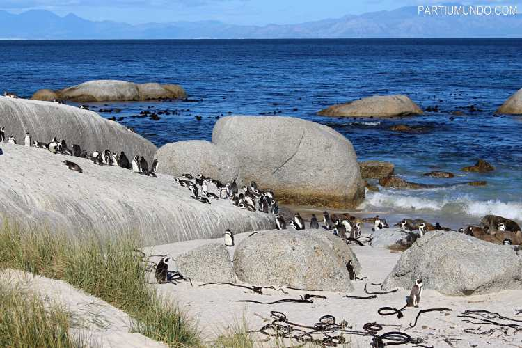 rsz_visiting_the_penguins_at_boulders_beach_12