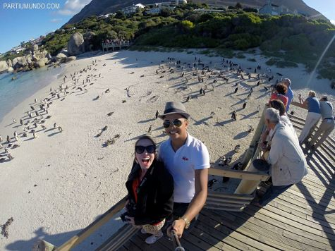 rsz_visiting_the_penguins_at_boulders_beach_4