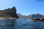 Visiting the seals at Duiker Island, Cape Town 20