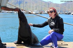 Visiting the seals at Duiker Island, Cape Town 27