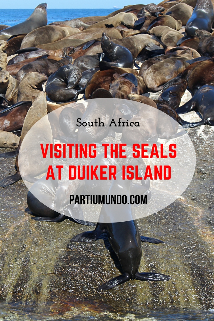 Visiting the seals at Duiker Island, Cape Town Pinterest