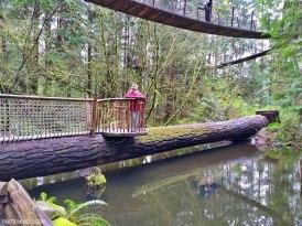 Parque Capilano Suspension Bridge 14