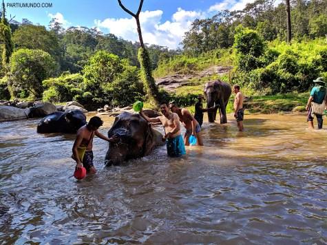 Santuário dos elefantes 27