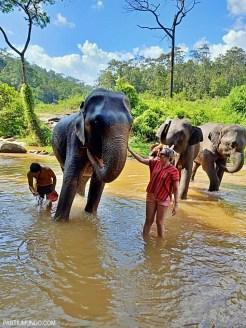 Santuário dos elefantes 29