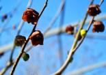 Spring in Danville