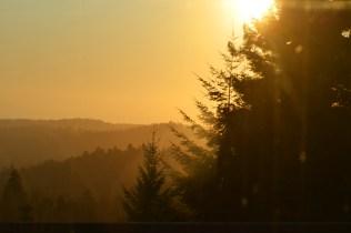 Redwoods at Dusk