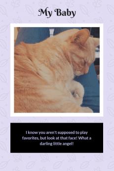 How pets enrich your life