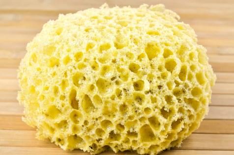 sponge-for-washing-1212612_1280