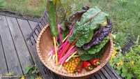 A late harvest from the garden