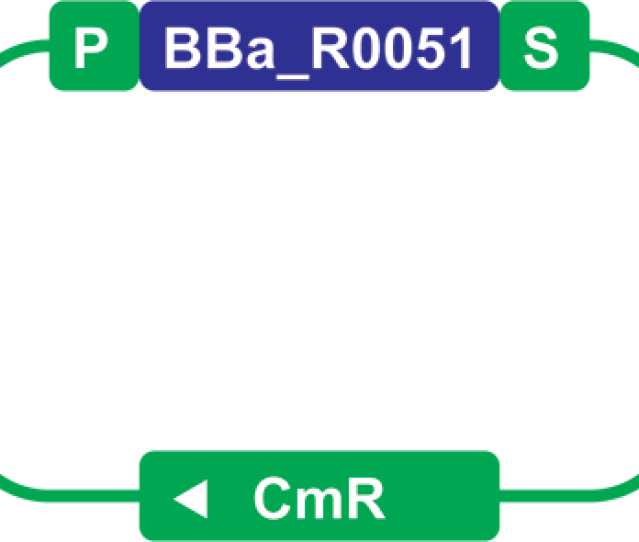 Here We Have A Part Sample Blue For Bba_r0051 Maintained In A Plasmid Backbone Green You Can See That The Part Sample Is Flanked By The Plasmid