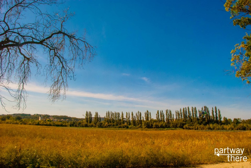 Fields outside Avignon, France that look like a Van Gogh painting