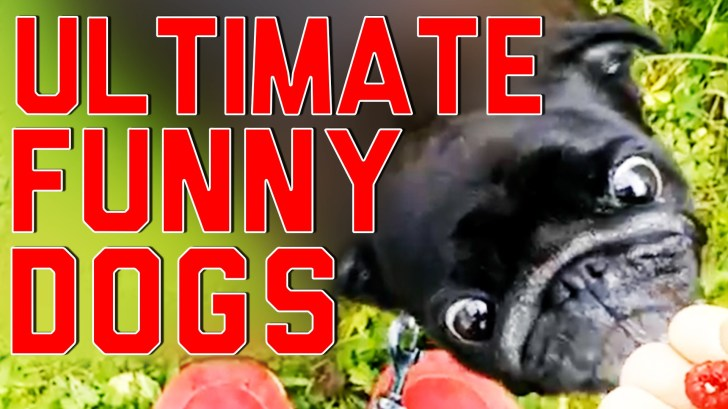 Ultimate-Funny-Dogs-Compilation-by-FailArmy