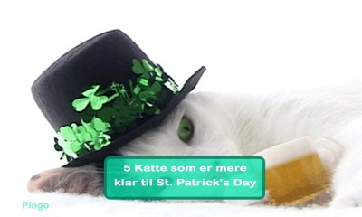 5 Katte som er mere klar til St. Patrick's Day
